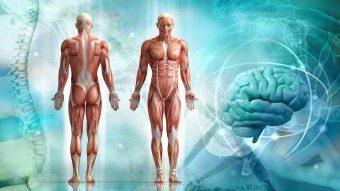 Anatomi och fysiologi 1